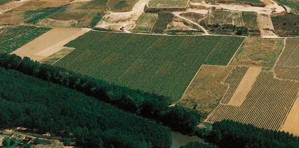 Vista aérea de los viñedos