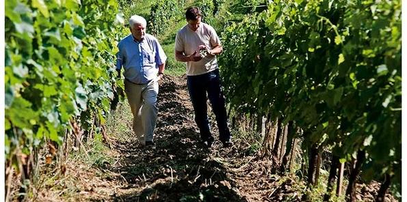 Paseo de los propietarios por las viñas