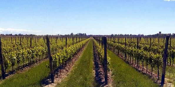 Panorámica del viñedo de Villanova