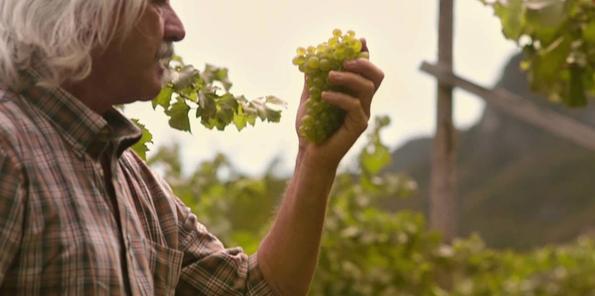 Luigi Veronelli (pionero del periodismo gastronómico italiano) en la viña