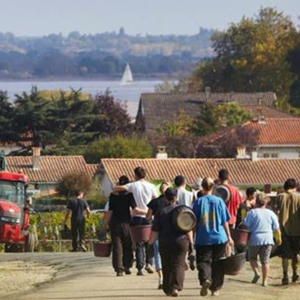 Trabajadores de Château Lynch Bages tras la vendimia