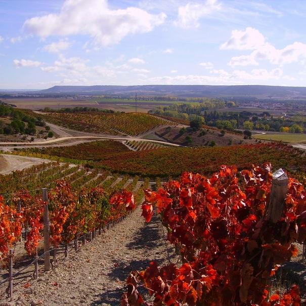 Panorámica de los viñedos de Quinta Sardonia