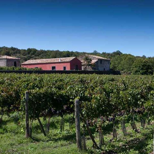 Bodega y viñedos sicilianos