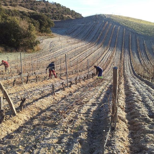 Trabajo en viñedos