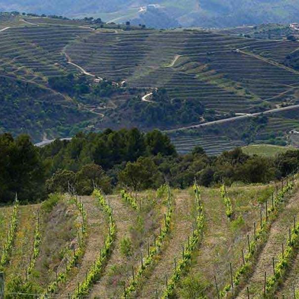 Vista de los viñedos, que crecen en un gran complejo de biodiversidad