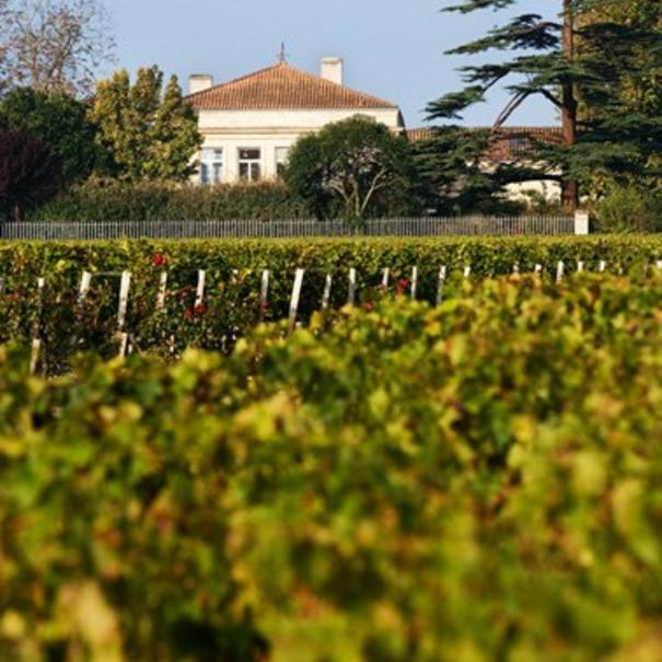 Imagen de los viñedos de Château Lynch Bages