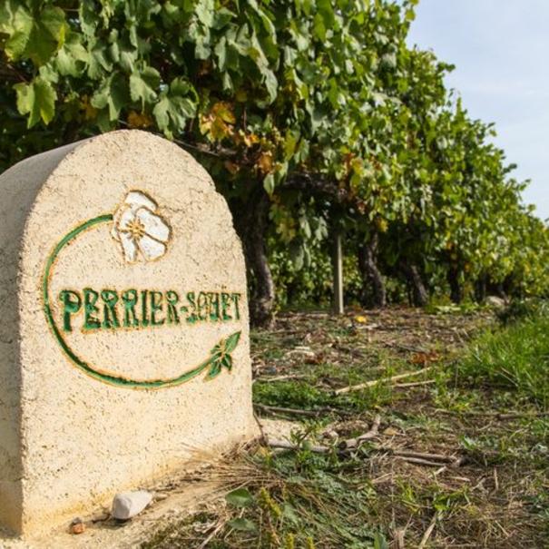 Indicación de Perrier-Jouët en sus viñedos