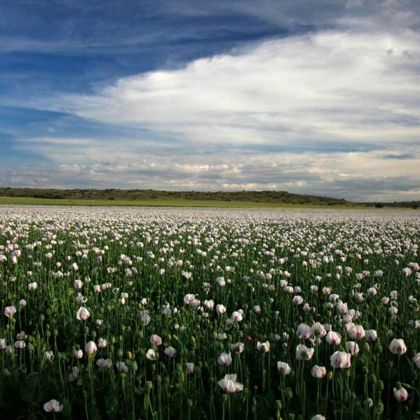 Paraje en Dehesa de los Llanos