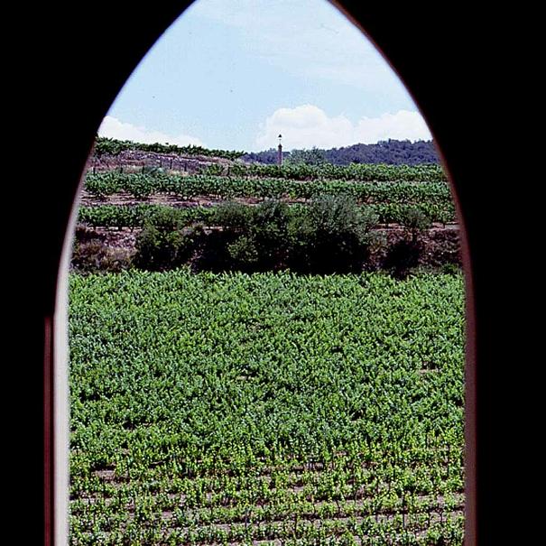 Vistas de los viñedos desde la bodega