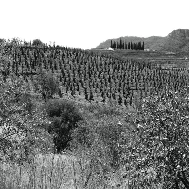 Las viñas del Priorato