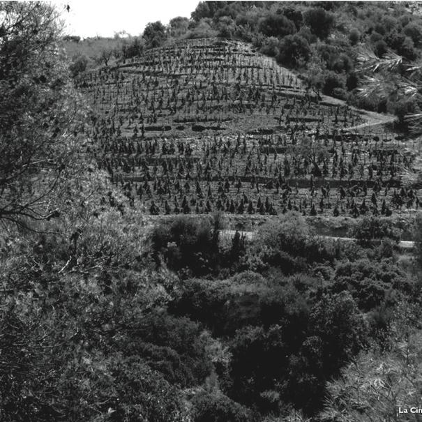 Las viñas de Álvaro Palacios