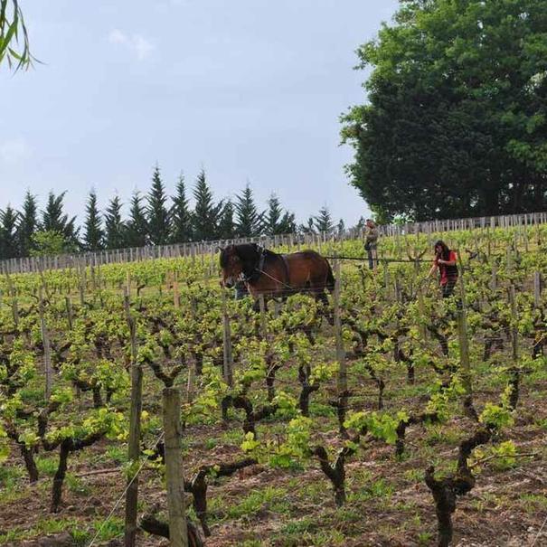 Arado del viñedo
