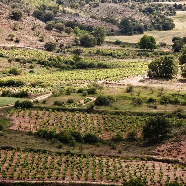 Viñedos en Atauta (Soria)