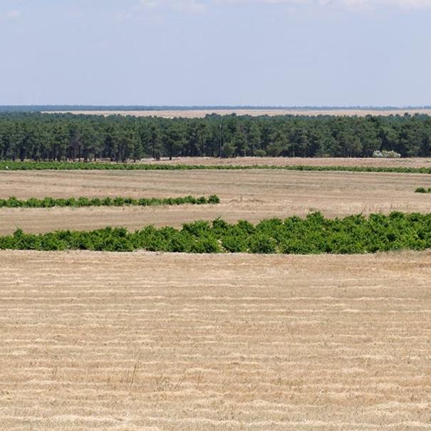 Campos de cereal y viñedos