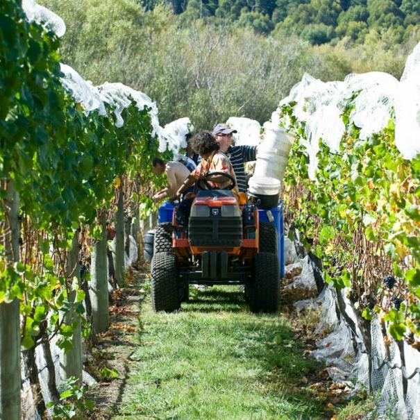 labores en viñedo