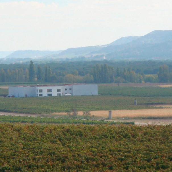 Panorámica de la bodega alrededor de las viñas