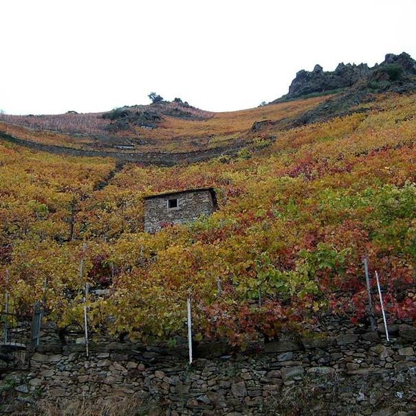 Vista del viñedo desde la parte inferior