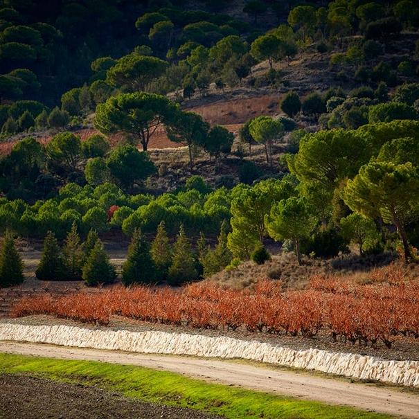 Imagen del entorno de los viñedos