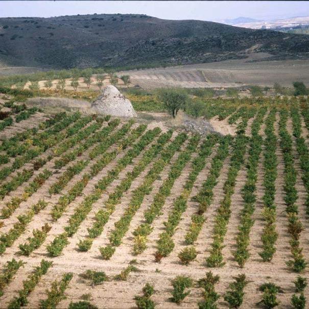 Hectáreas de viñedo de Alto Moncayo