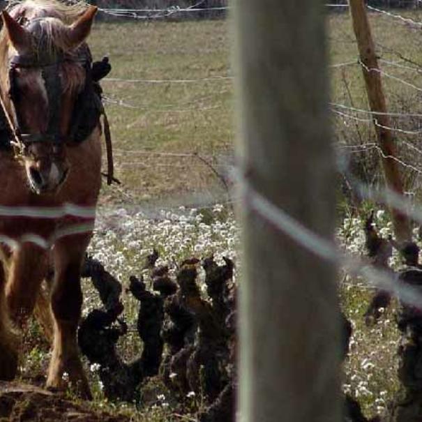 Arado con caballos