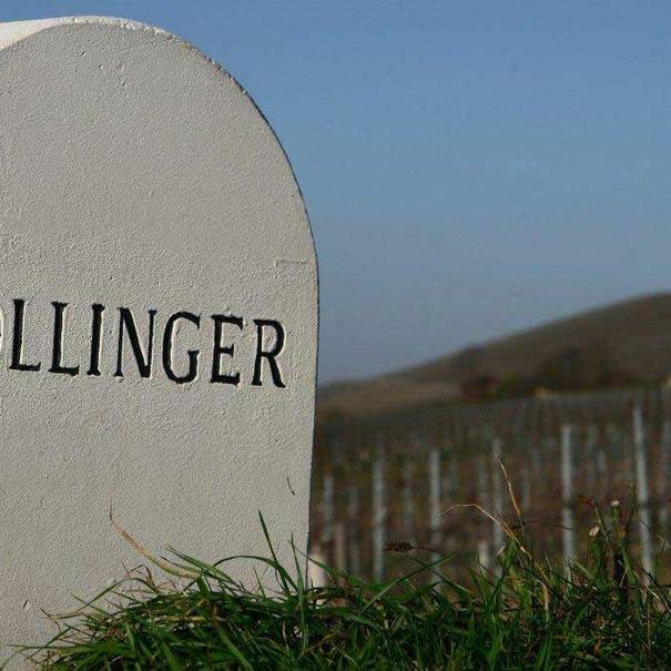 Algunas de las hectáreas de viñedos de Bollinger