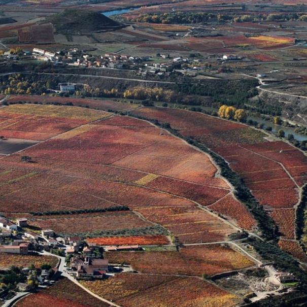 Imagen aérea de viñedos con el río Ebro al lado