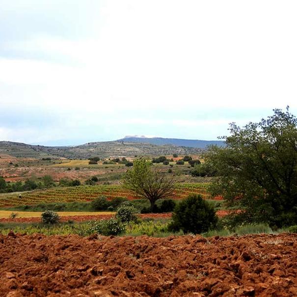 Panorámica de tierras en Castilla y Léon