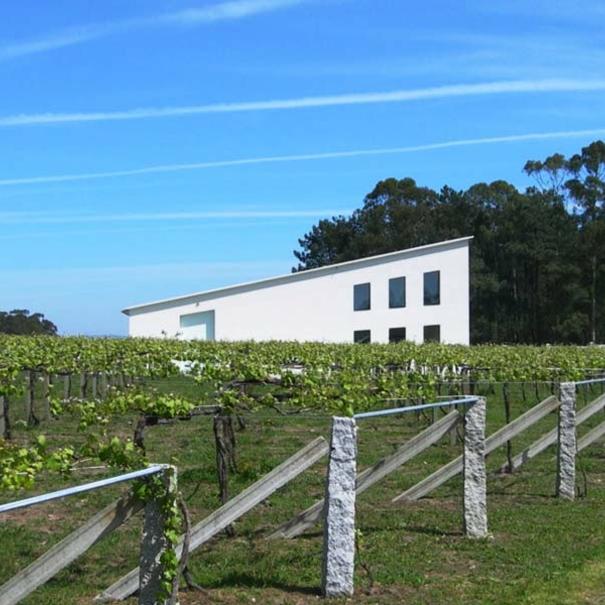 Vista general de los viñedos