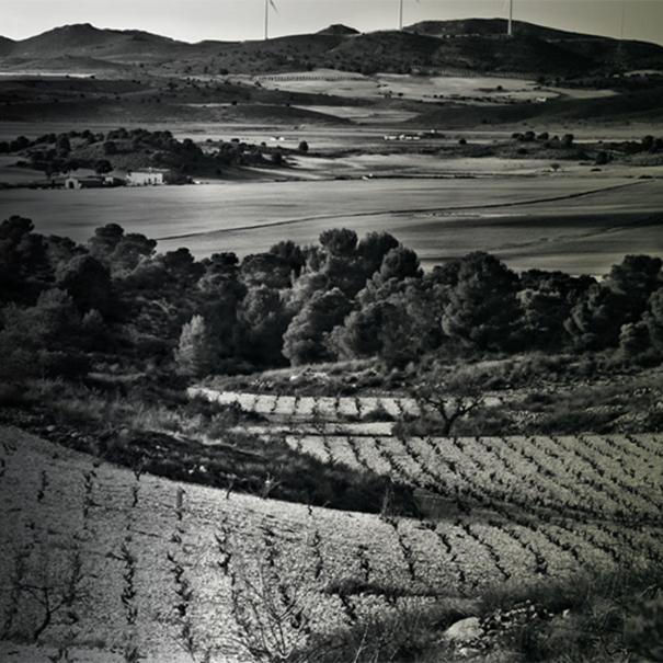 Vista del viñedo en blanco y negro