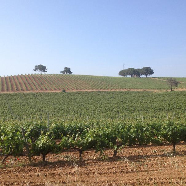 Vista de los viñedos junto al Río Duero