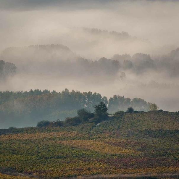 La niebla levantándose sobre los viñedos