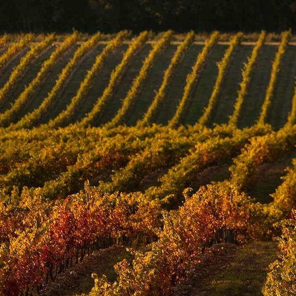 Los desniveles propios de los viñedos