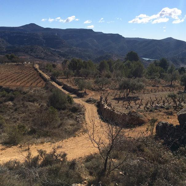 Camí del Montsant