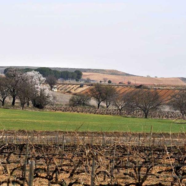 Vista del viñedo propio de Loess