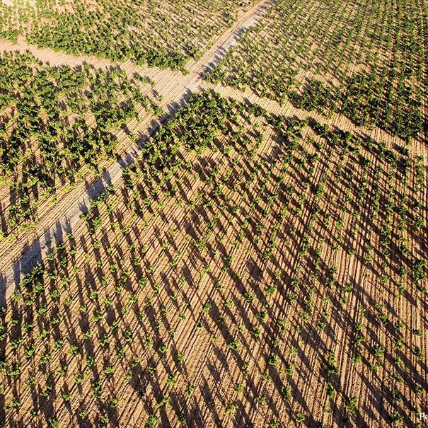 Vista aérea del viñedo Tondonia