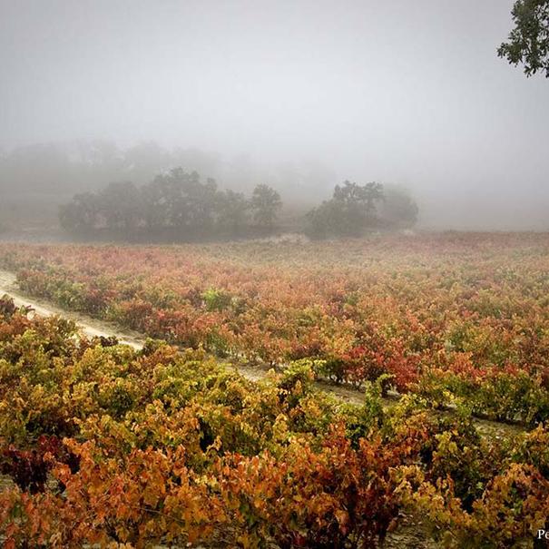 Un ejemplo del particular microclima del viñedo de Tondonia