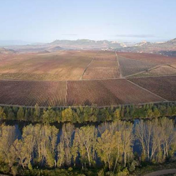El viñedo, junto a un meandro del Río Ebro