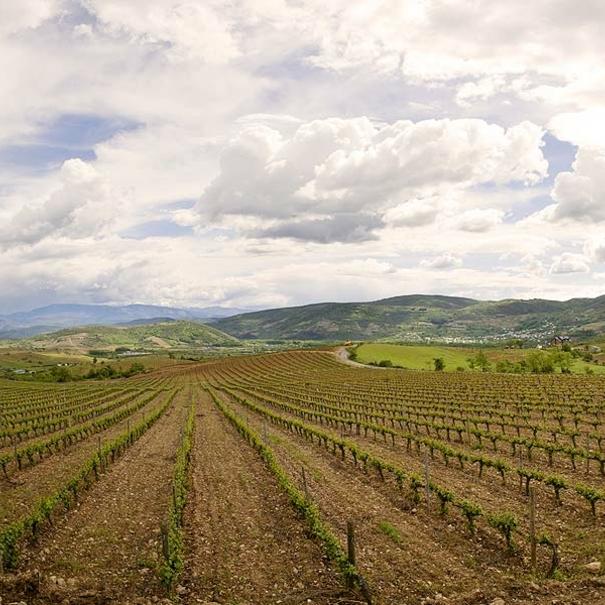 Panorámica de los viñedos situados en Villafranca del Bierzo