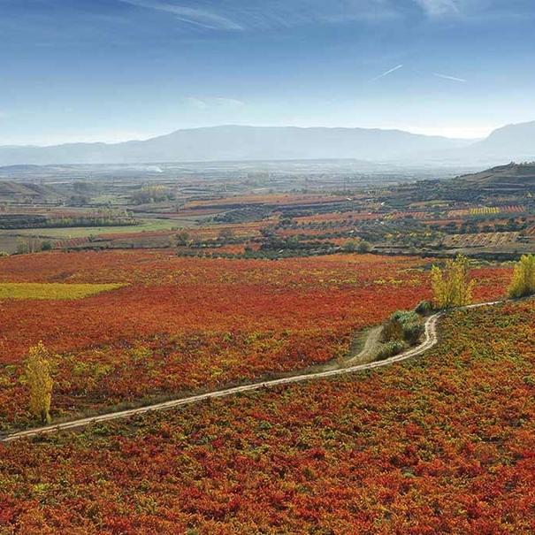 Los colores otoñales en La Rioja