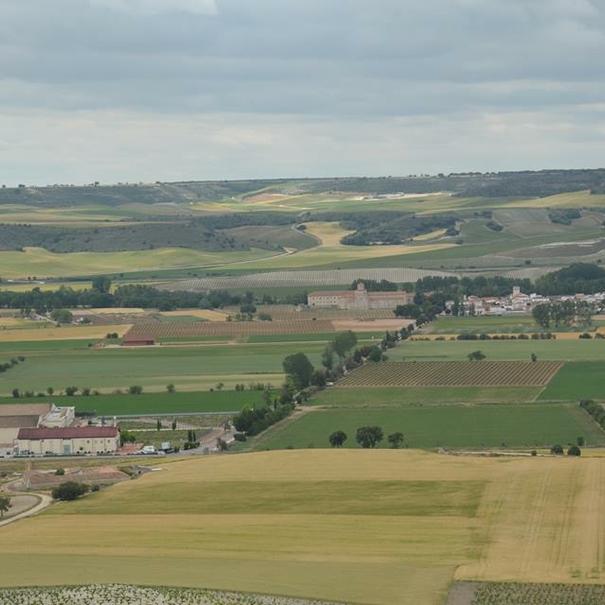 Vista aérea de los viñedos de Matarromera