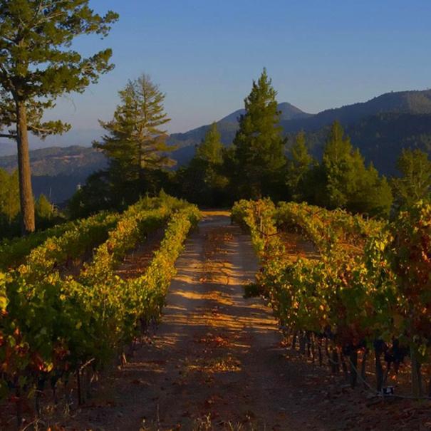 Vista de los viñedos en Newton Vineyard