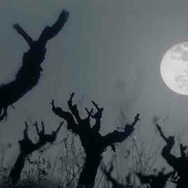Vista nocturna de las cepas