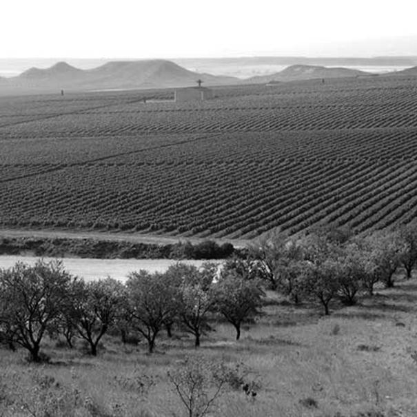 Imagen de los viñedos en blanco y negro