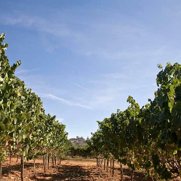 Paso entre los viñedos