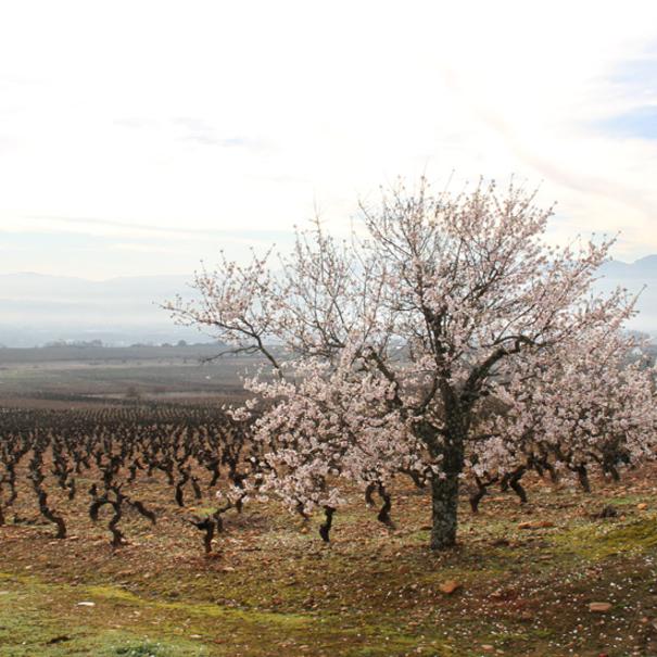 Panorámica de los viñedos de Peique
