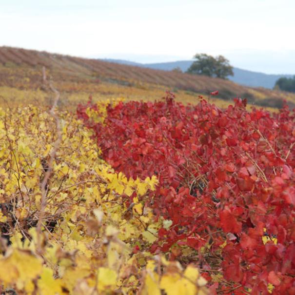 El color del campo en Peique