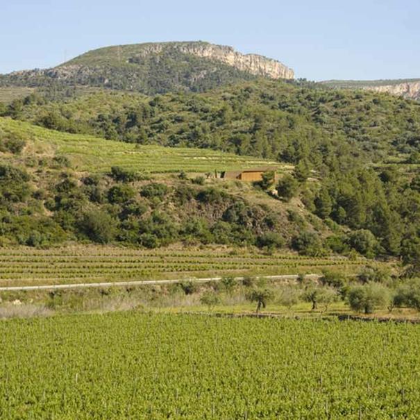 Vista de viñedo