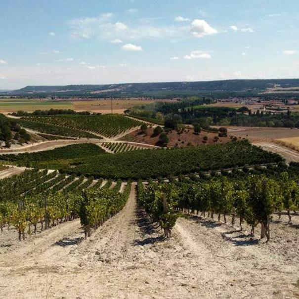 Panorámica del viñedo desde una elevación