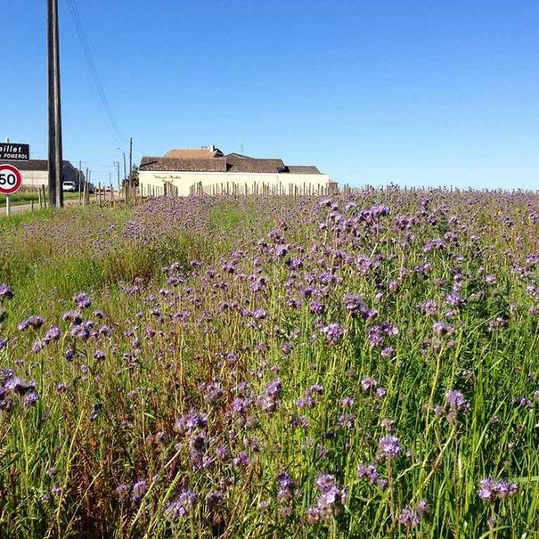 Primavera en Le Bon Pasteur
