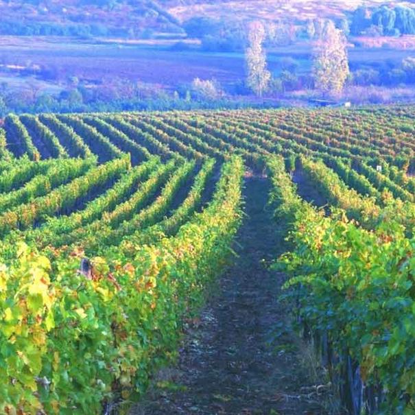 Paisaje de viñedos en Hungría